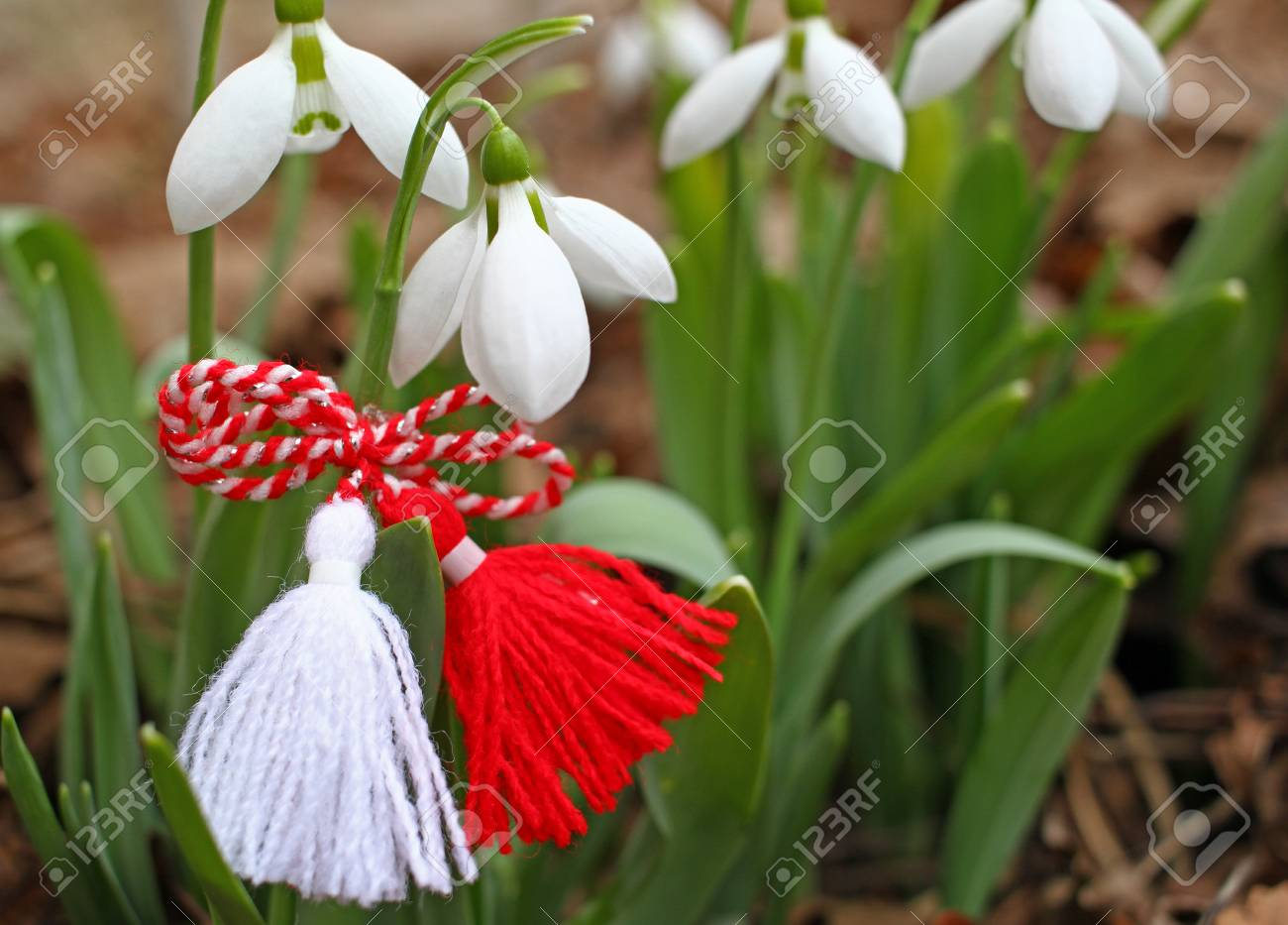 117811616 snowdrops and martenitsa symbols of spring white snowdrop flowers and martisor baba marta holiday tr